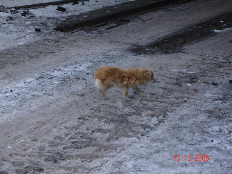 2006-12-12 Командировка Амур 55.JPG