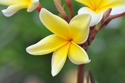 Florida Flowers 2012/2013