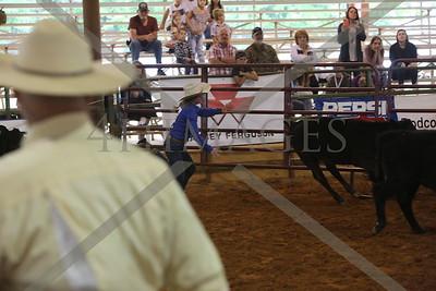 calf scramble jr