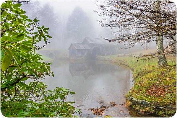 Beautiful in the Fog