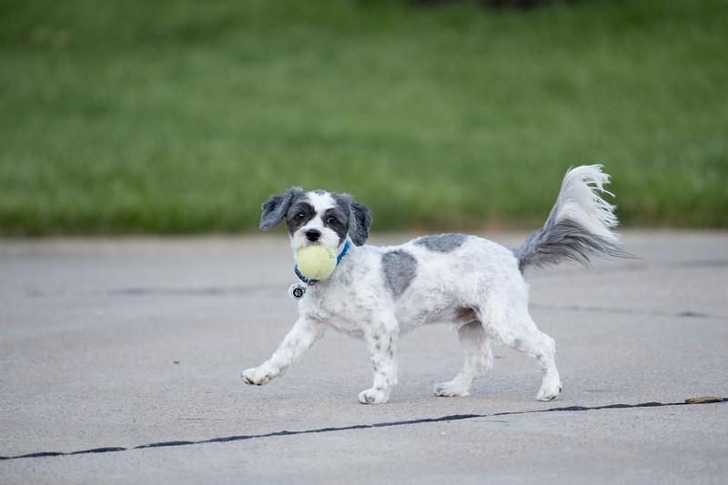 LuLu - Brady - Cooper Play Friends (55 of 109).jpg