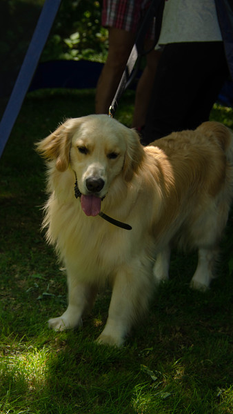 PuppyParty18-314.jpg