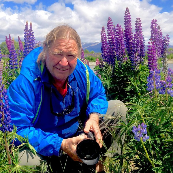 The lupine were in full bloom in New Zealand.