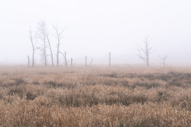 Dead Trees Landscape Photography.jpg