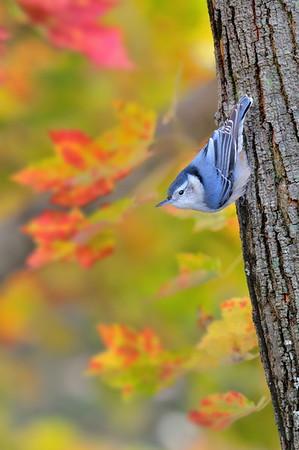 BillCorbett - Birds