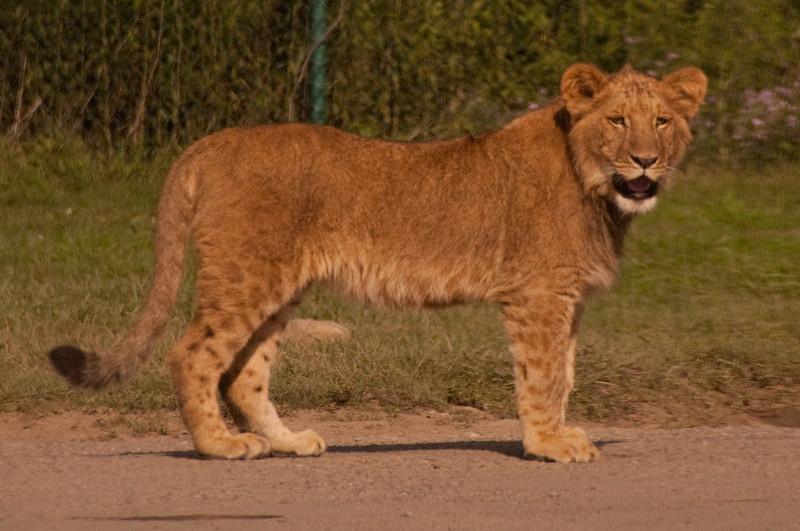Carabana african safari Park8-09-9.jpg