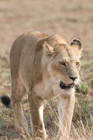 Tanzania Part 2: Safari!
