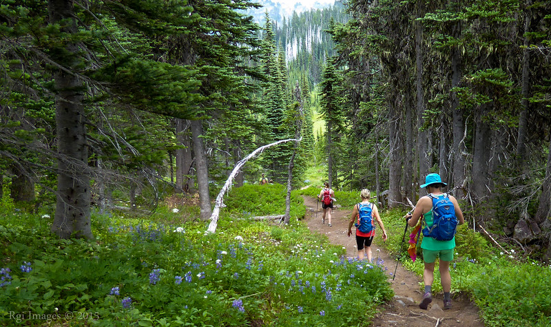 Heading north on the Wonderland trail from Indian Henry's.