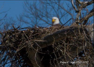 Cutaloosa Eagles PA