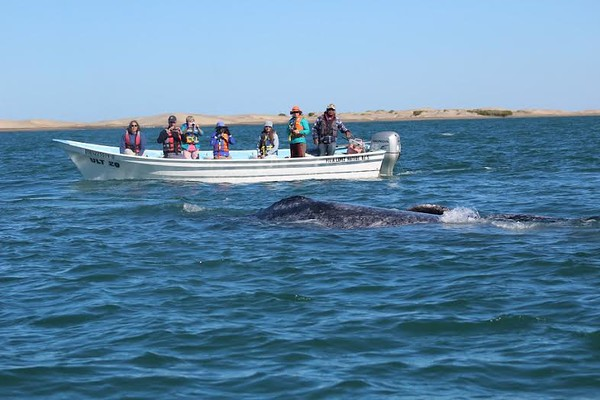 A whale swims close to a boat in Magdalena Bay