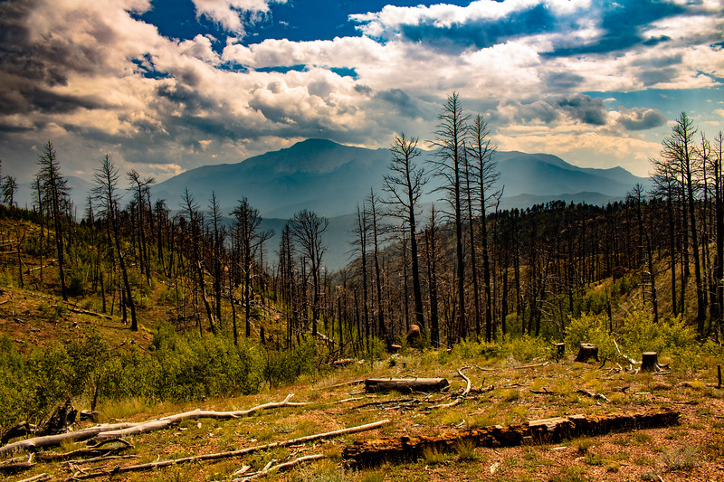 Pikes Peak and Fire Damaged Trees