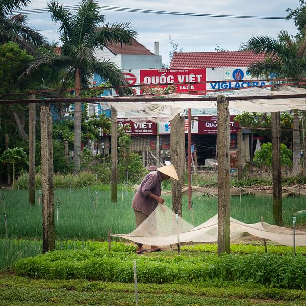Vietnam-8121792.jpg