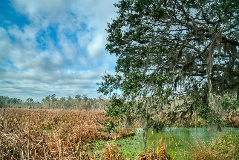 South Carolina Winter 2019-9.jpg