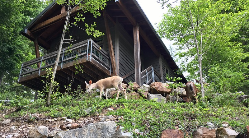 Deer at the North Cascades Environmental Learning Center