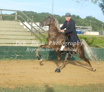CLASS 12  FOUR YR OLD AMATEUR SPECIALTY