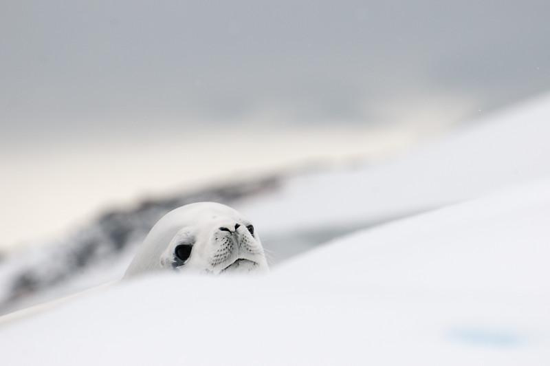 Antarctica 2015 (25 of 99).jpg