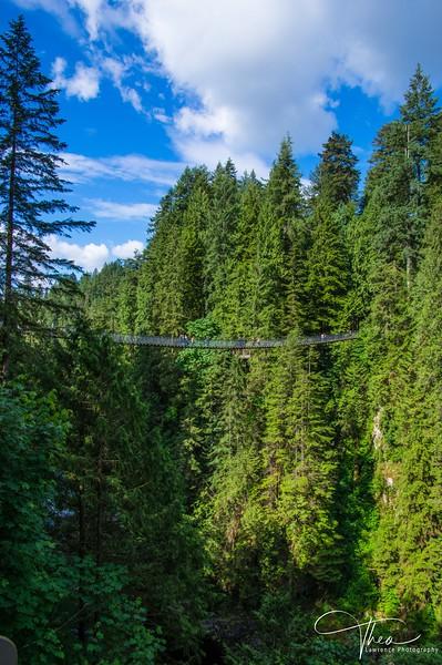 Suspension Bridge - Capilano Park