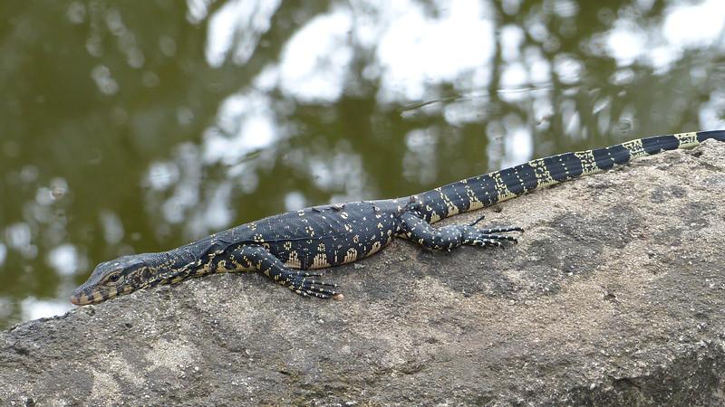 Langs de Dutch Canals Negombo