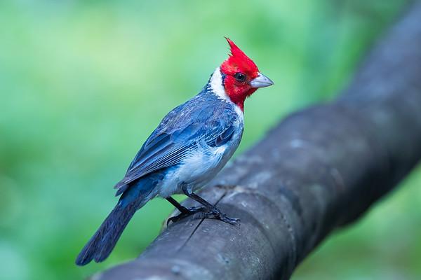 Hawaii Birding
