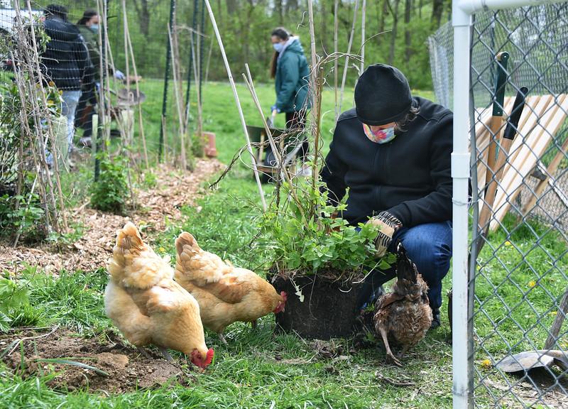 SU_Farm_Student_PlantingHops_ADJ_332.jpg