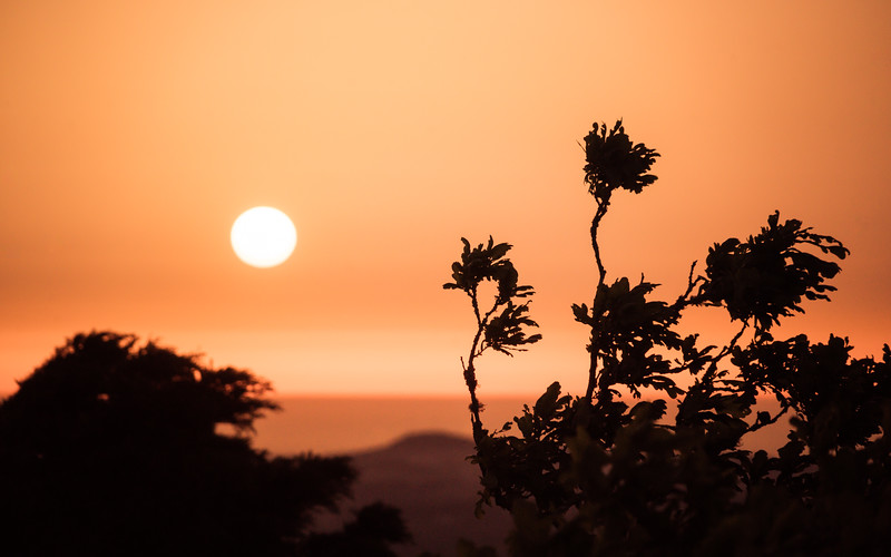 sunrise-flowers-sintra-portugal.jpg