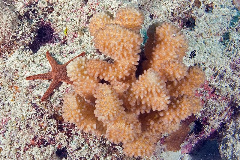 Starfish and Coral.jpg