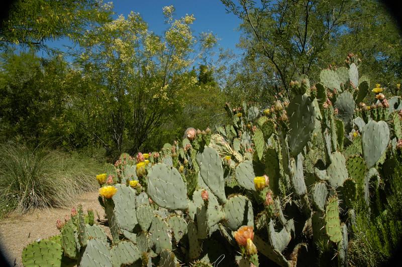20050429 Sabino Canyon027.jpg