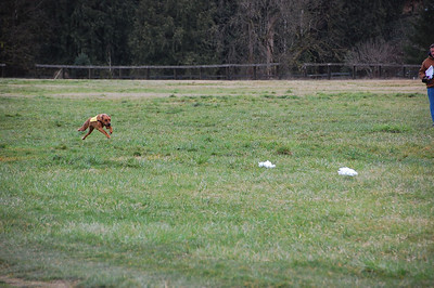 Finch Coursing 2013