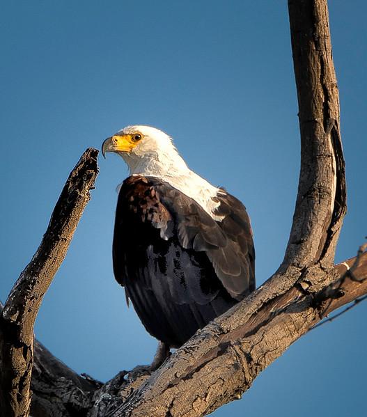 2014-08Aug-Okavango Masters-17-Edit.jpg