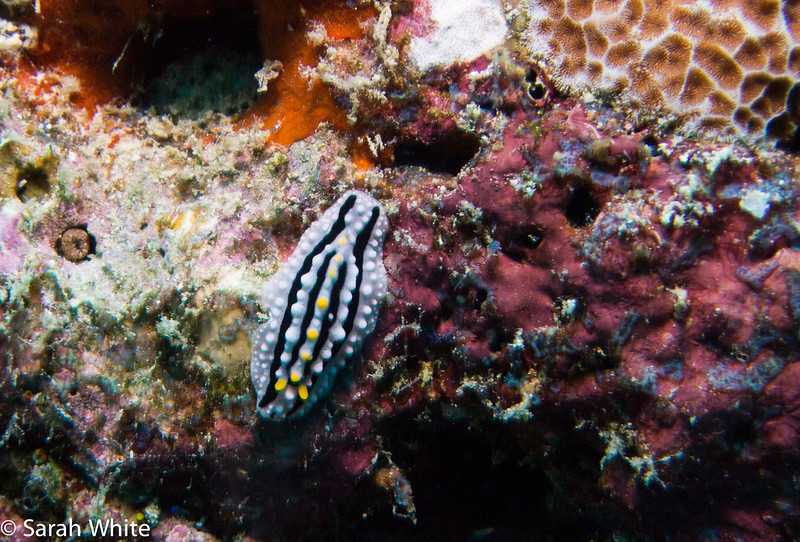 Maldives 2012-293.jpg
