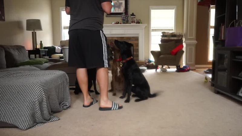 Layla Training Movie