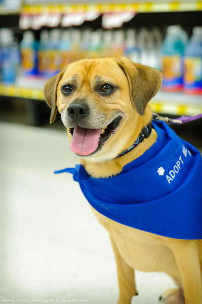 20110611 PetSmart Adoption Event-29.jpg