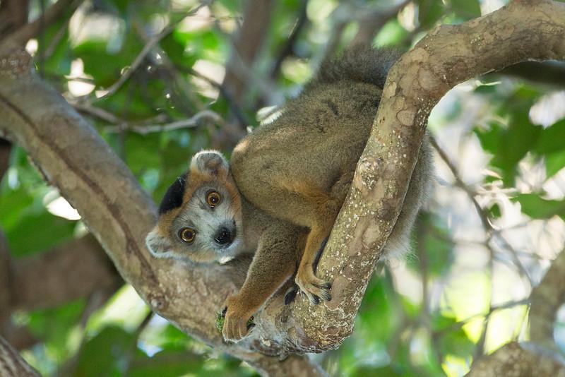 Madagascar_2013_FH0T2203.jpg