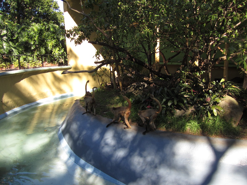 Sydney - Sydeny Zoo-66.JPG