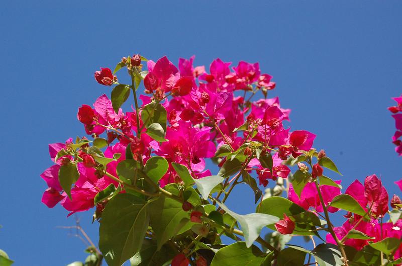 20120607_Scottsdale Back Yard_017.JPG