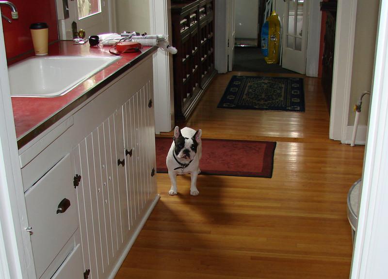 Audrey in Ann Marie's kitchen