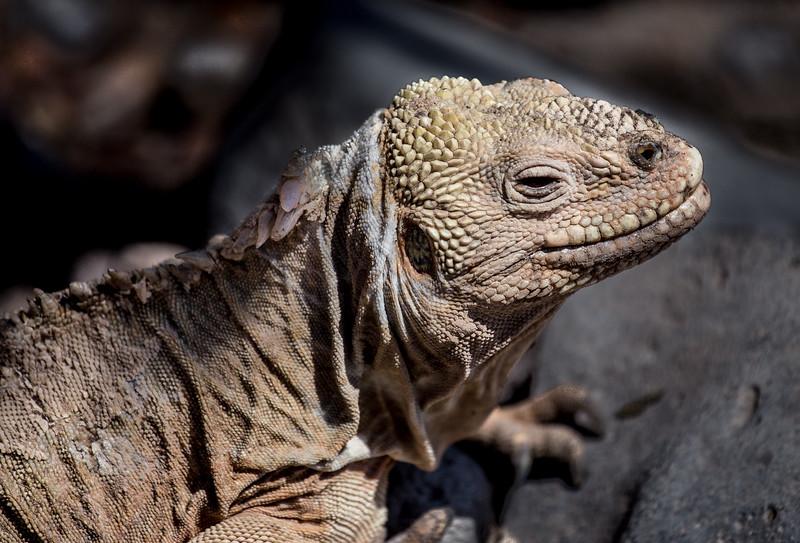 Galapagos_MG_4874.jpg