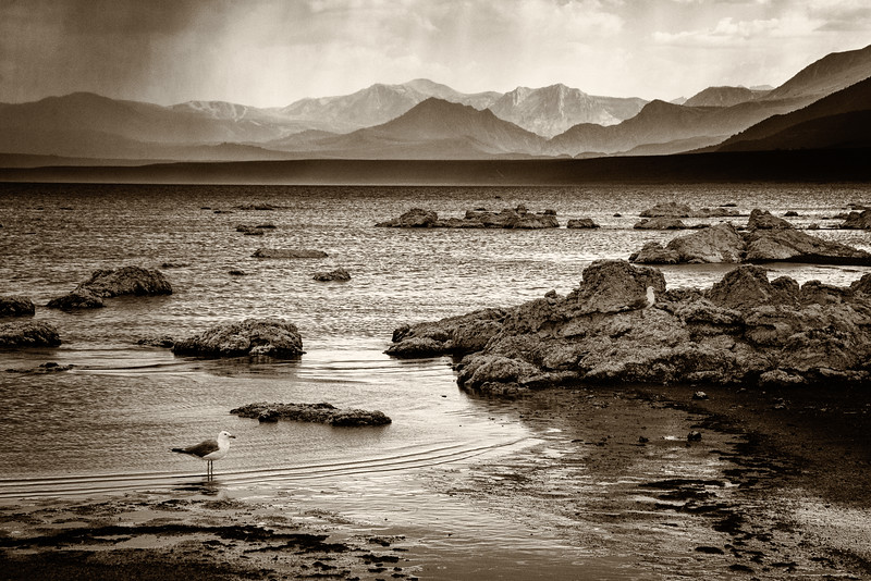 Storm and Bird at Mono Lake