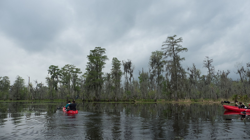 ManchacSwamp-6906.jpg