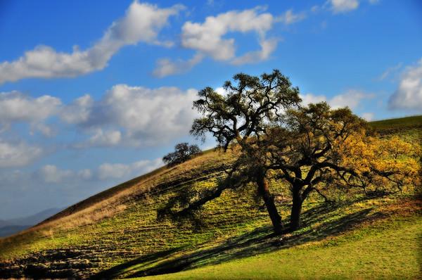 oak, trees, hills