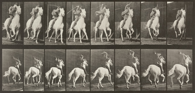 Horse Dan galloping, saddled with rider (Animal Locomotion, 1887, plate 634)