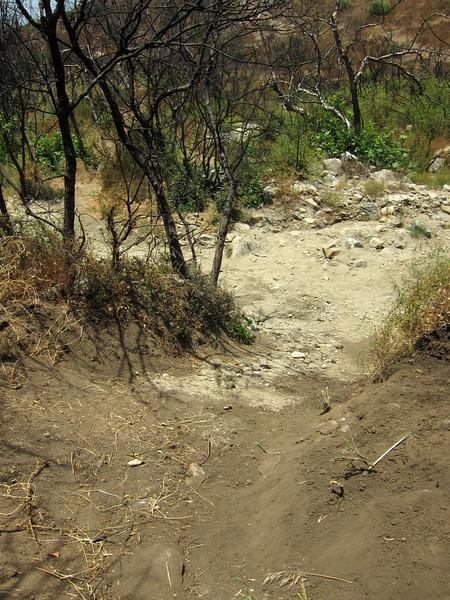20100710049-Doc Larsen Trailwork CORBA.JPG