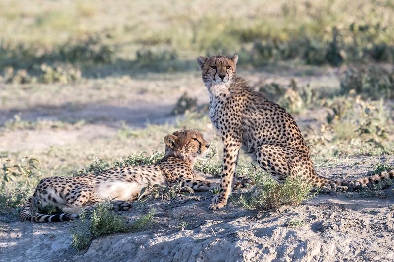 Tanzania_Feb_2018-89.jpg