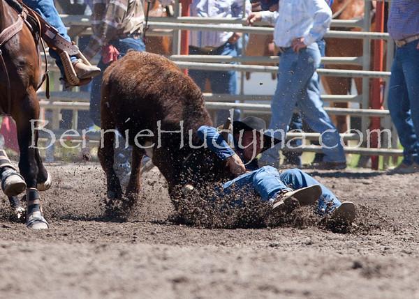 Steer Wrestling - Saturday