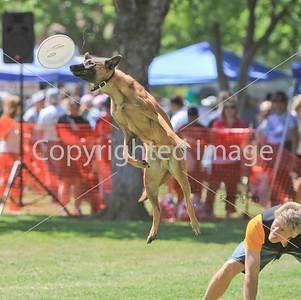 Sac. Doggie Dash Demo