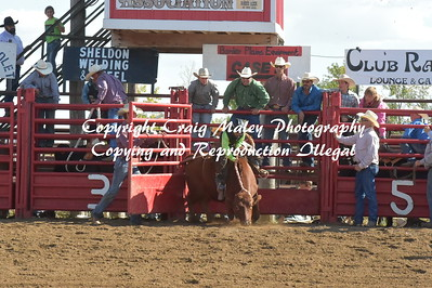 STEEERS SADDLEBRONC 9-13-2016
