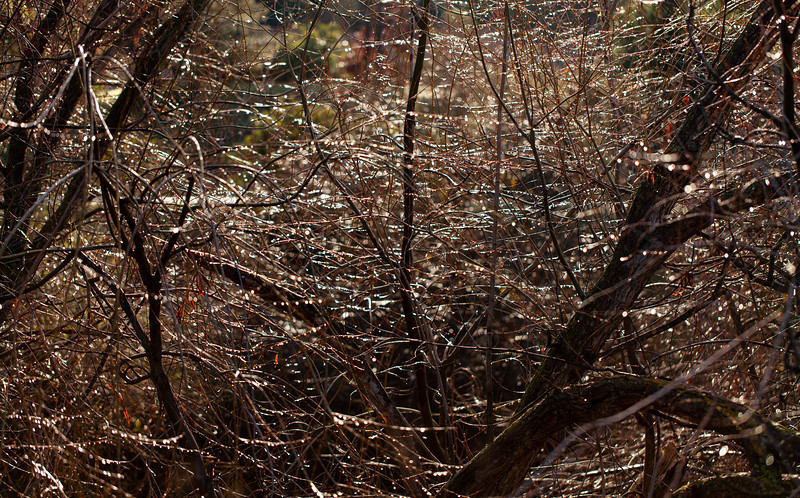 Wet Branches, Campbell, California, 2009