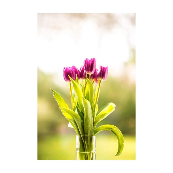 50_Tulips_10x10.jpg