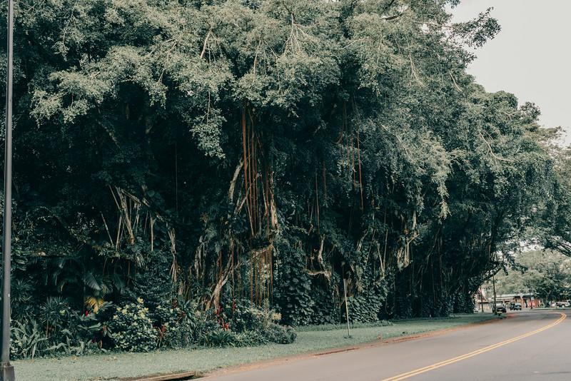 Hawaii20-354.jpg