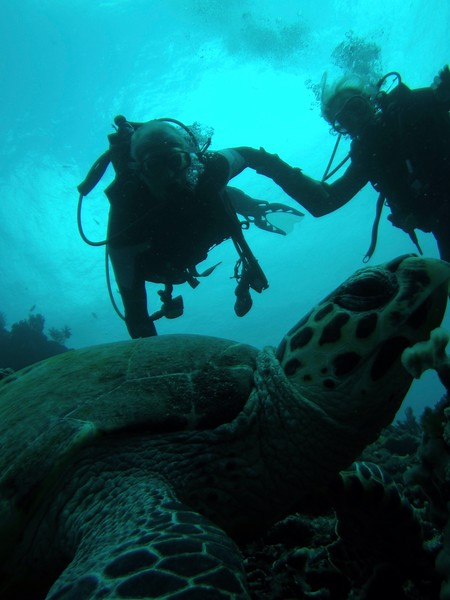2019101908121519--1829506293892243033-Scuba TurtleKandS.JPG